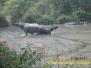 Wildlife Nepal